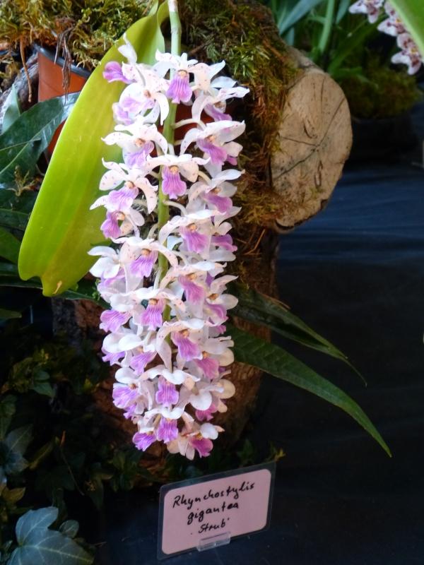 Neu-Ulmer Orchideentage 07.02.-09.02.2014   003x6kar