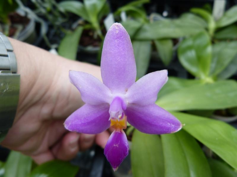 Besuch bei MSB Orchideen in Schwabach 004f4uay