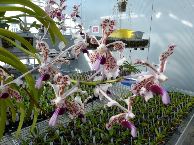 Ich war in Schwabach bei MSB Orchideen 004mwsft