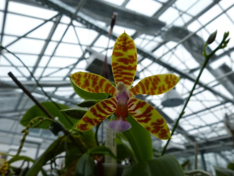 Besuch bei MSB Orchideen in Schwabach 005fzu2y