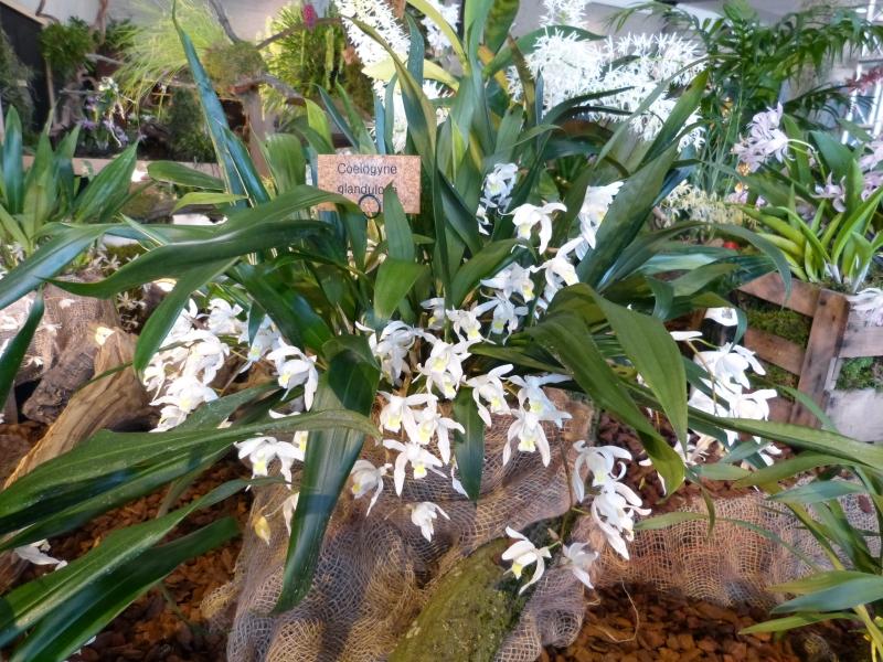 Neu-Ulmer Orchideentage 07.02.-09.02.2014   005gvk3m