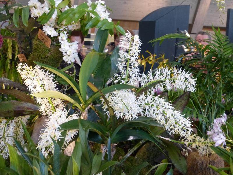 Neu-Ulmer Orchideentage 07.02.-09.02.2014   006xlj26