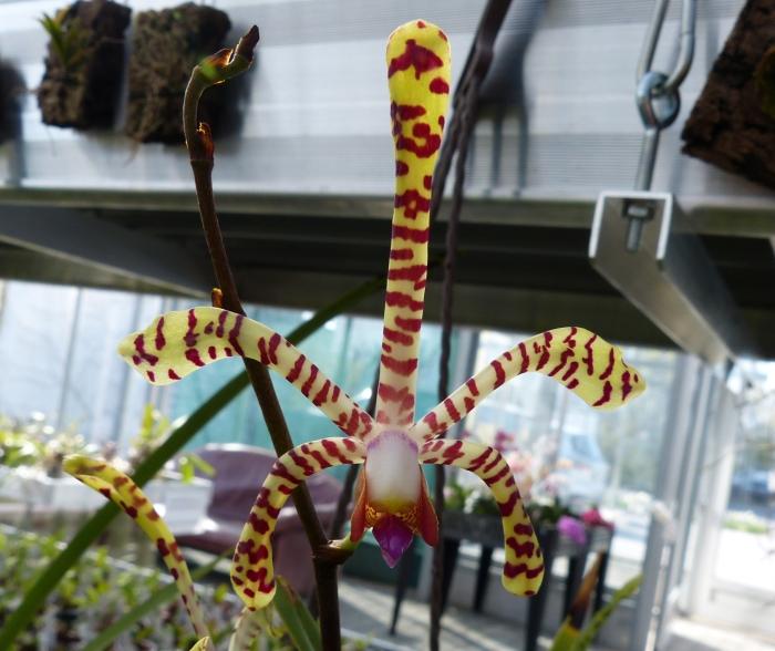 Ich war in Schwabach bei MSB Orchideen 007fgszr