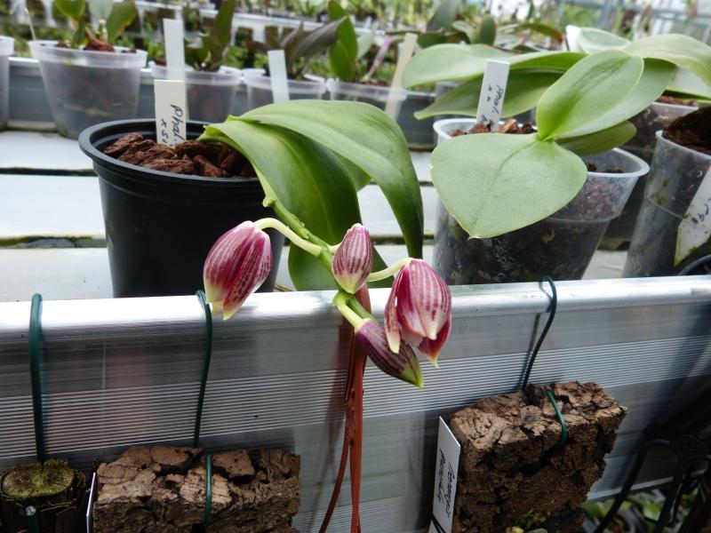 Besuch bei MSB Orchideen in Schwabach 008onu27
