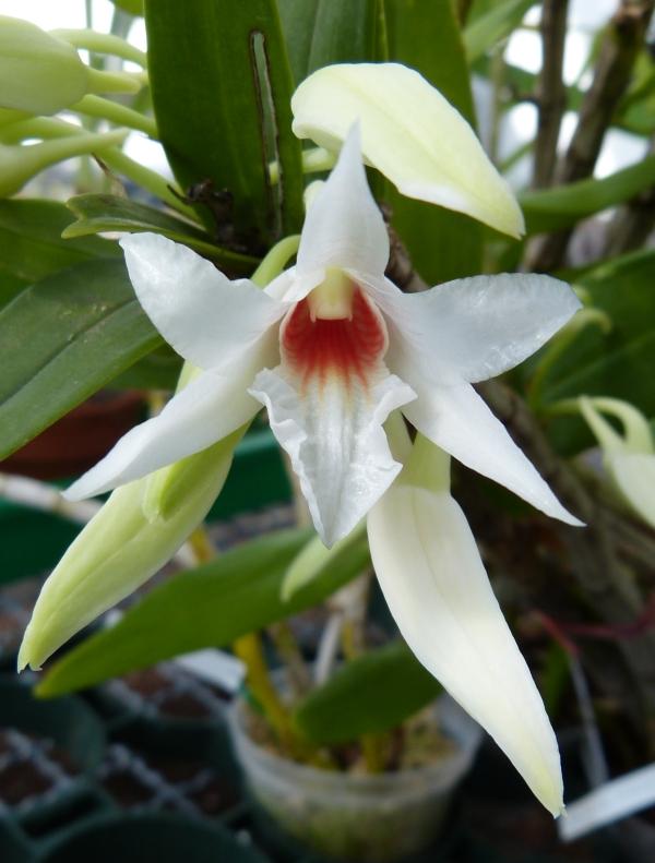 Ich war in Schwabach bei MSB Orchideen 009eqsq5