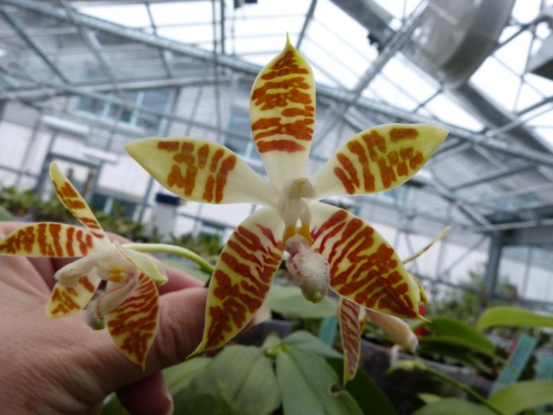 Besuch bei MSB Orchideen in Schwabach 010zause