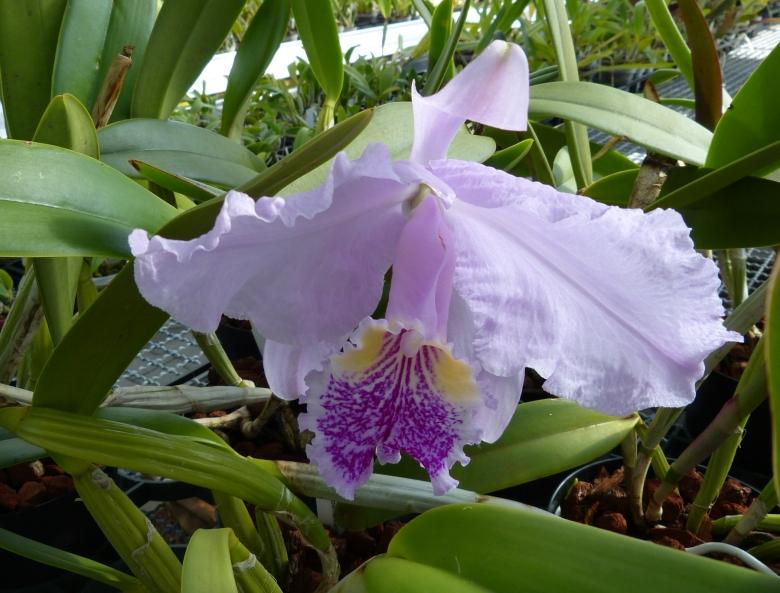 Ich war in Schwabach bei MSB Orchideen 010zzsyz
