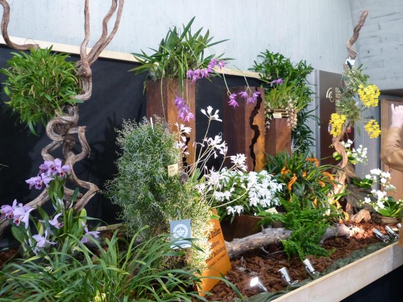 Neu-Ulmer Orchideentage 07.02.-09.02.2014   012lpjfj