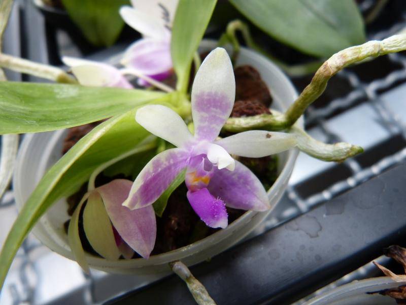 Besuch bei MSB Orchideen in Schwabach 012z0uqa