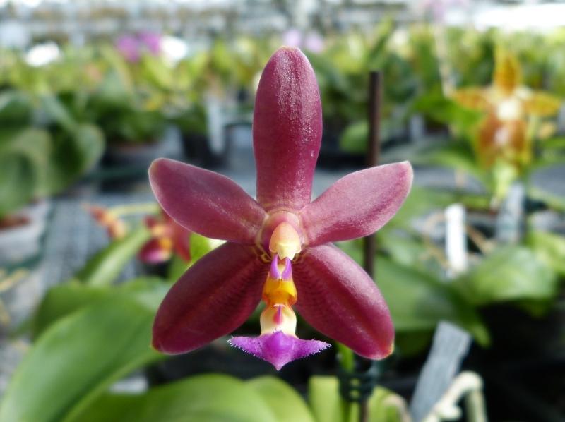 Ich war in Schwabach bei MSB Orchideen 013oysrf