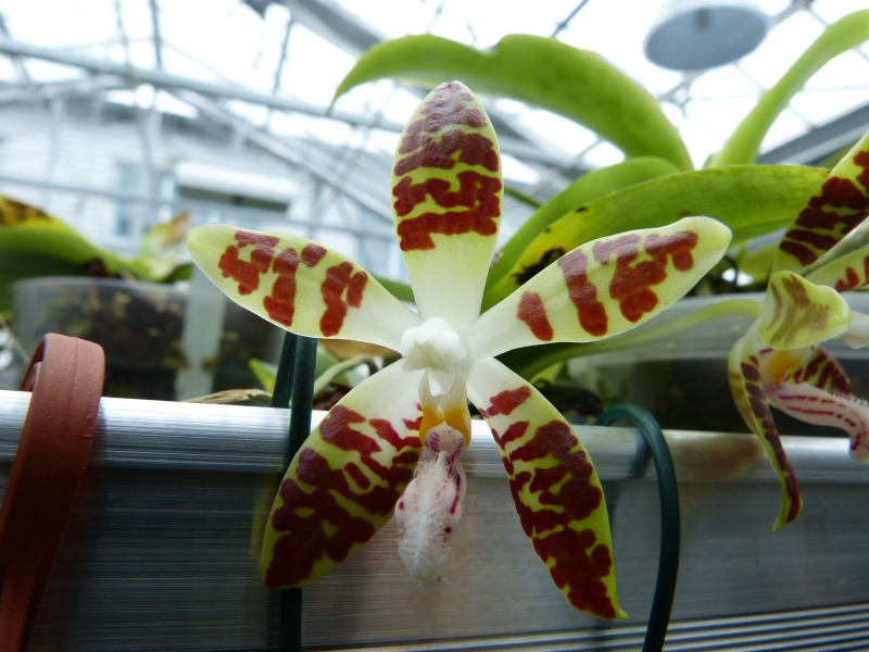 Besuch bei MSB Orchideen in Schwabach 015o9upl