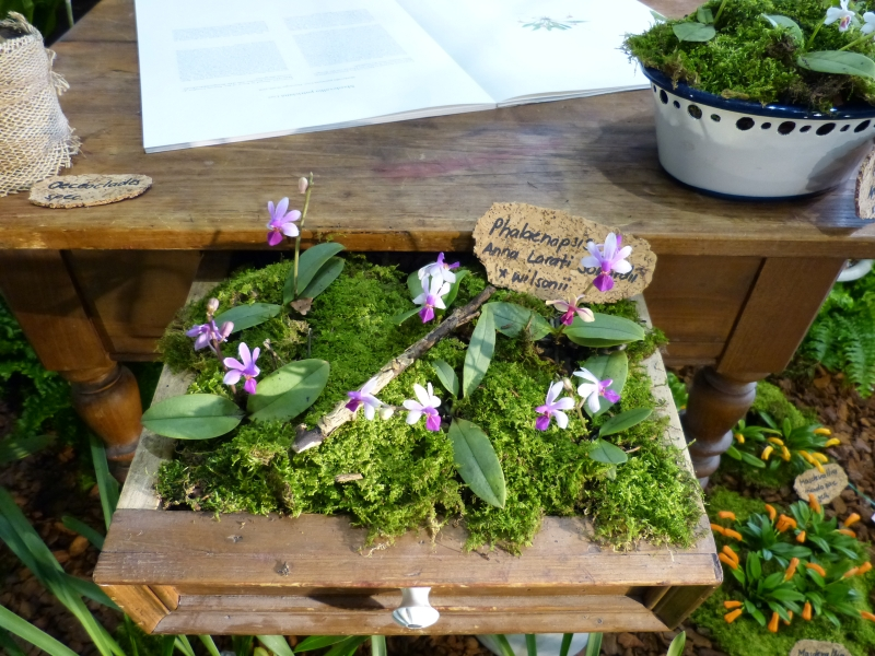 Neu-Ulmer Orchideentage 07.02.-09.02.2014   0160qkob
