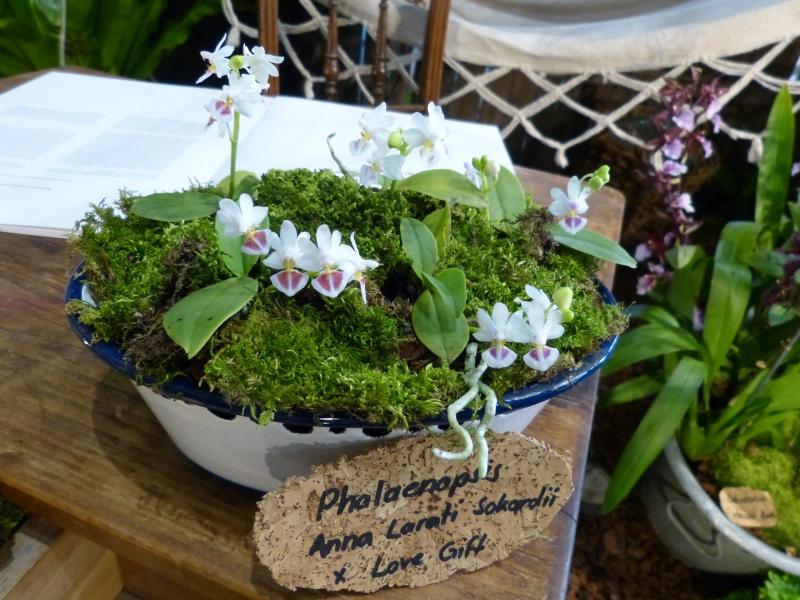 Neu-Ulmer Orchideentage 07.02.-09.02.2014   0173ajjw