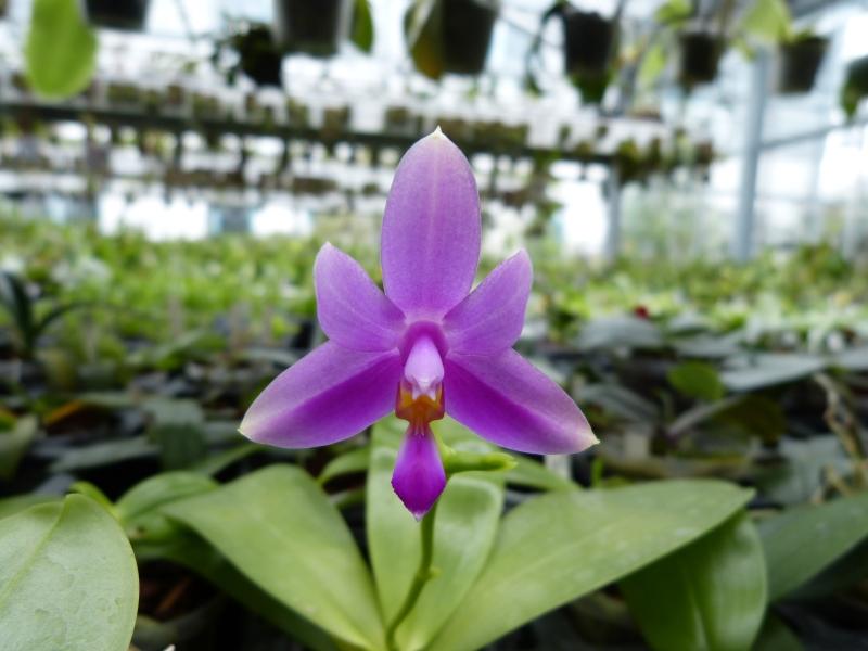Besuch bei MSB Orchideen in Schwabach 017o1uyh