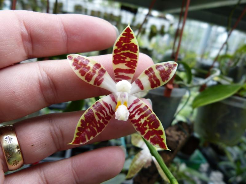Besuch bei MSB Orchideen in Schwabach 018pyuiv