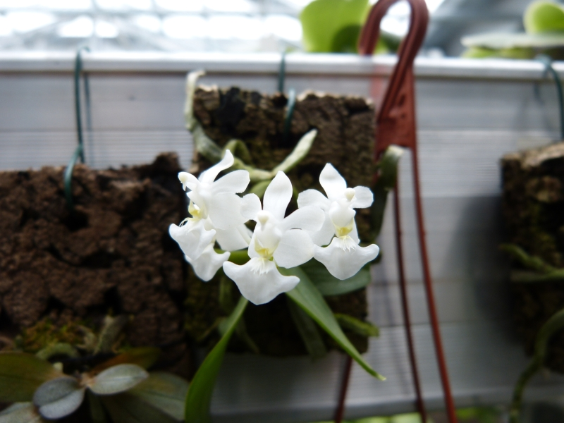 Besuch bei MSB Orchideen in Schwabach 020u4uej