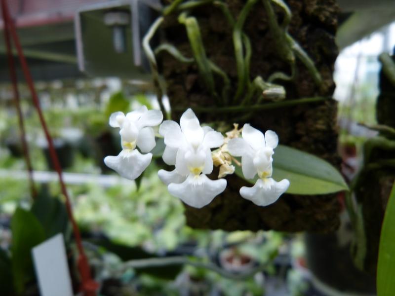 Besuch bei MSB Orchideen in Schwabach 021fdu8r