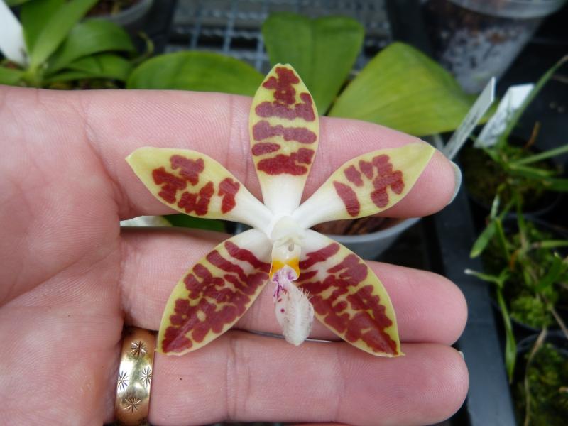 Besuch bei MSB Orchideen in Schwabach 022wuuf5