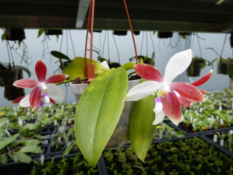 Besuch bei MSB Orchideen in Schwabach 023yxuru