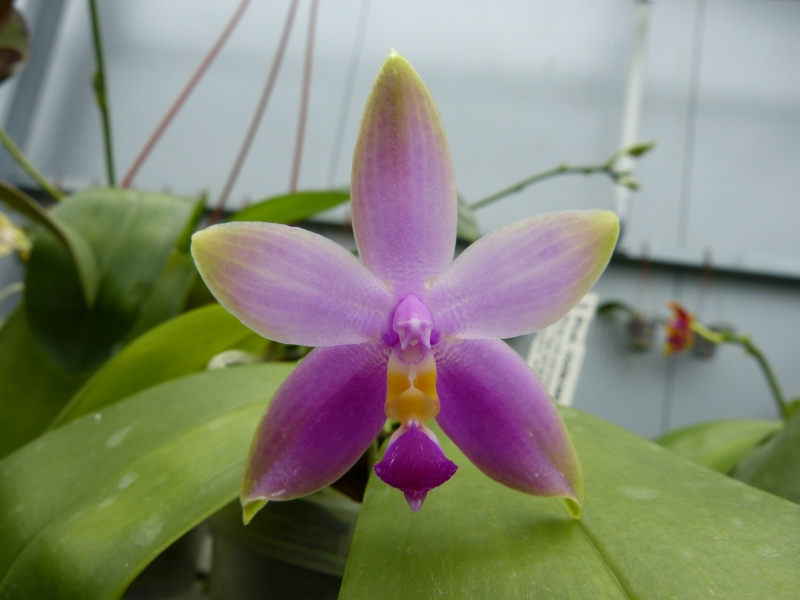 Besuch bei MSB Orchideen in Schwabach 024fuusg
