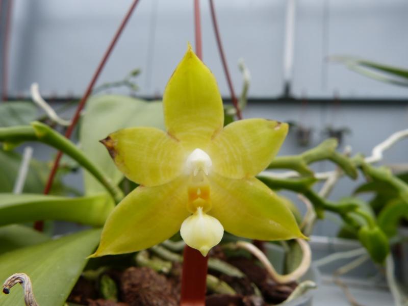 Besuch bei MSB Orchideen in Schwabach 02540ub1