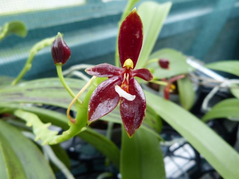 Besuch bei MSB Orchideen in Schwabach 026uyuje