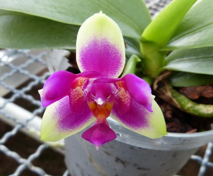 Ich war in Schwabach bei MSB Orchideen 0275ys13