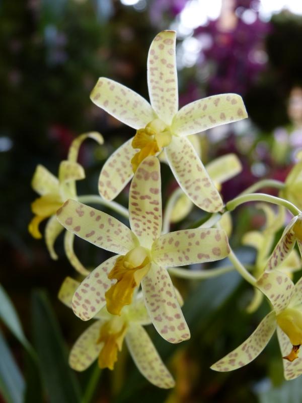 Neu-Ulmer Orchideentage 07.02.-09.02.2014   027rpjox