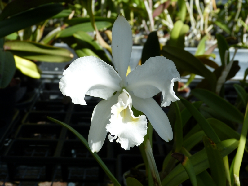 Ich war in Schwabach bei MSB Orchideen 028o6scr
