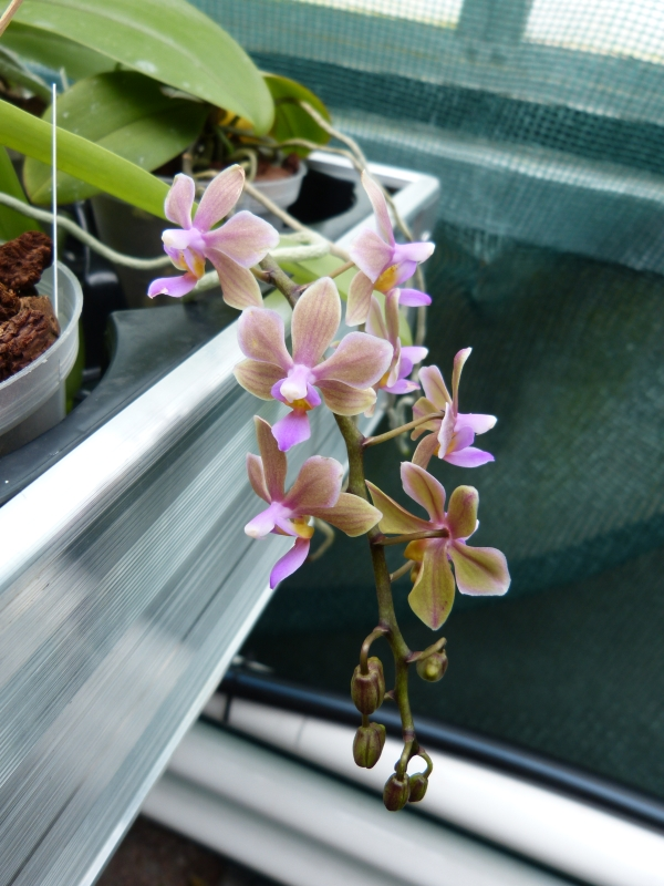 Besuch bei MSB Orchideen in Schwabach 028sbuiz