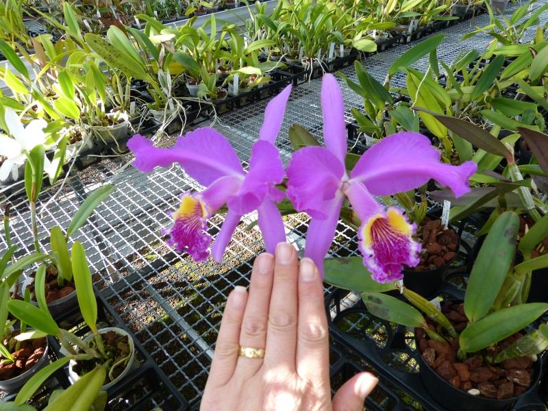 Ich war in Schwabach bei MSB Orchideen 029n7su9