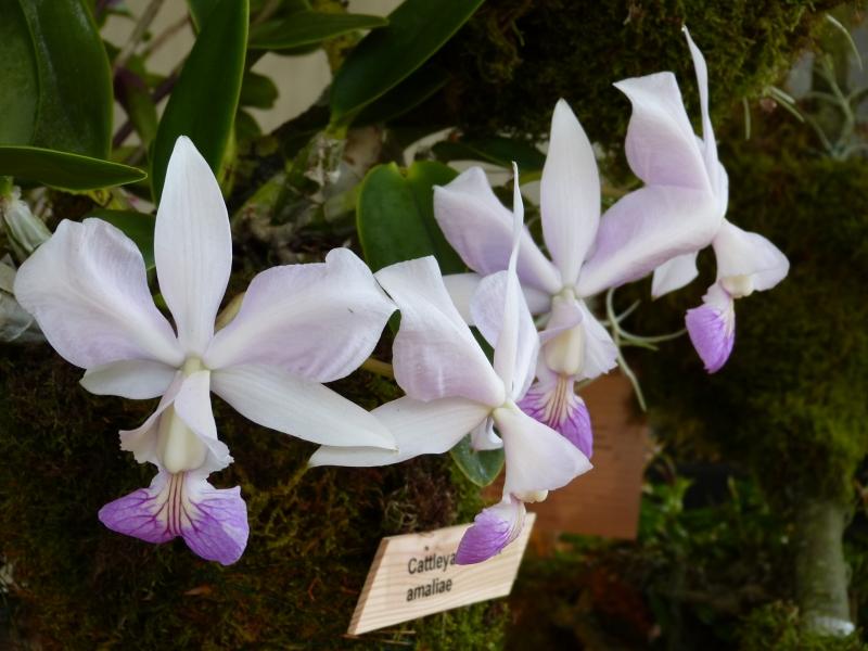 Neu-Ulmer Orchideentage 07.02.-09.02.2014   029n8kxy