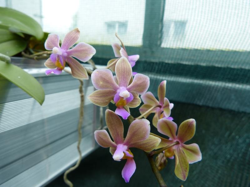 Besuch bei MSB Orchideen in Schwabach 029ubulh