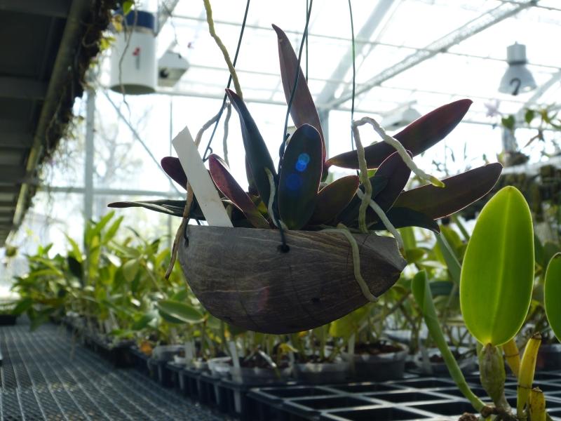 Ich war in Schwabach bei MSB Orchideen 030bhszs