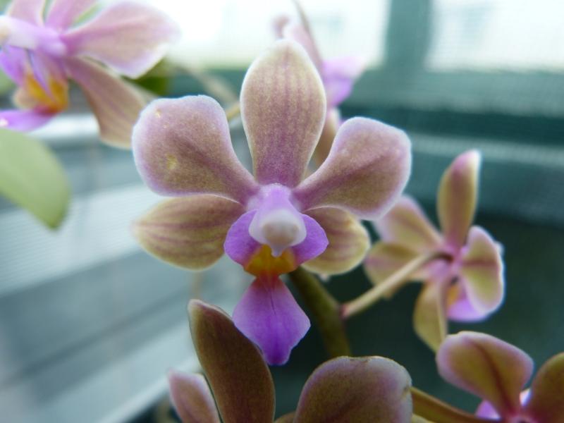 Besuch bei MSB Orchideen in Schwabach 030zrue8