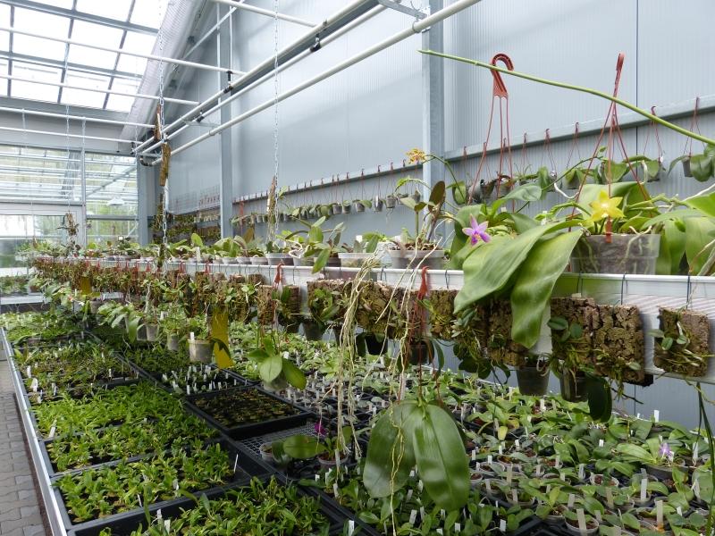 Besuch bei MSB Orchideen in Schwabach 031bhukq