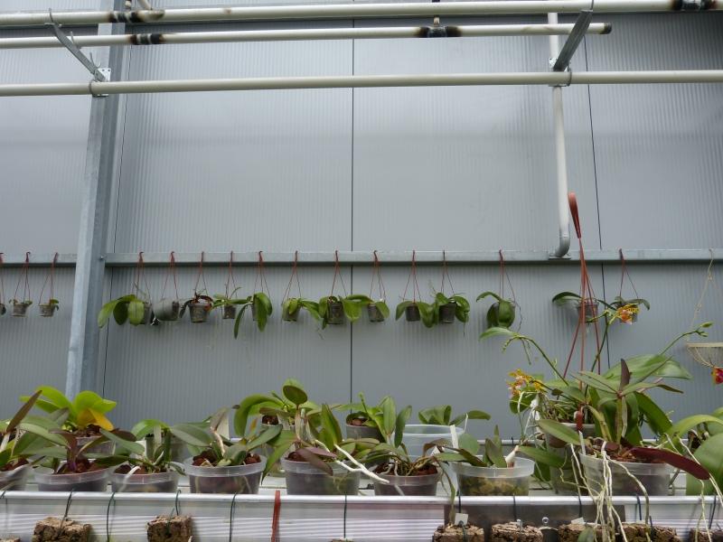 Besuch bei MSB Orchideen in Schwabach 032b5ujt