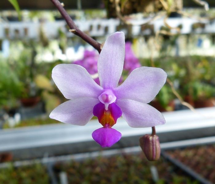 Ich war in Schwabach bei MSB Orchideen 032qwsm2