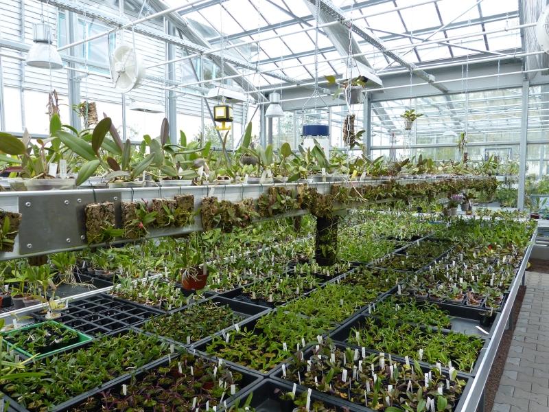 Besuch bei MSB Orchideen in Schwabach 0339muxh