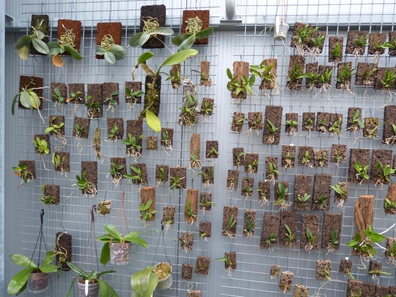 Besuch bei MSB Orchideen in Schwabach 0351zujp