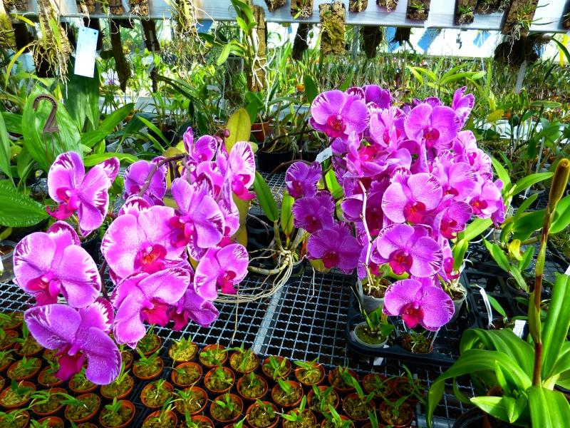 Ich war in Schwabach bei MSB Orchideen 0359tsg9