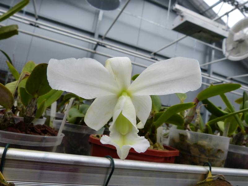 Besuch bei MSB Orchideen in Schwabach 03664umn