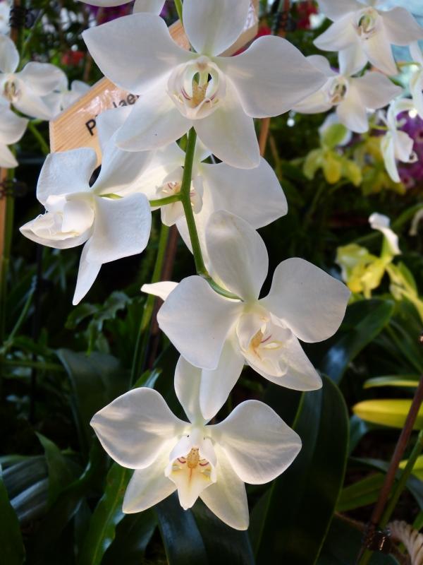 Neu-Ulmer Orchideentage 07.02.-09.02.2014   036o1k6x