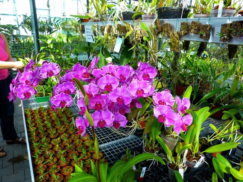 Ich war in Schwabach bei MSB Orchideen 036p3saw