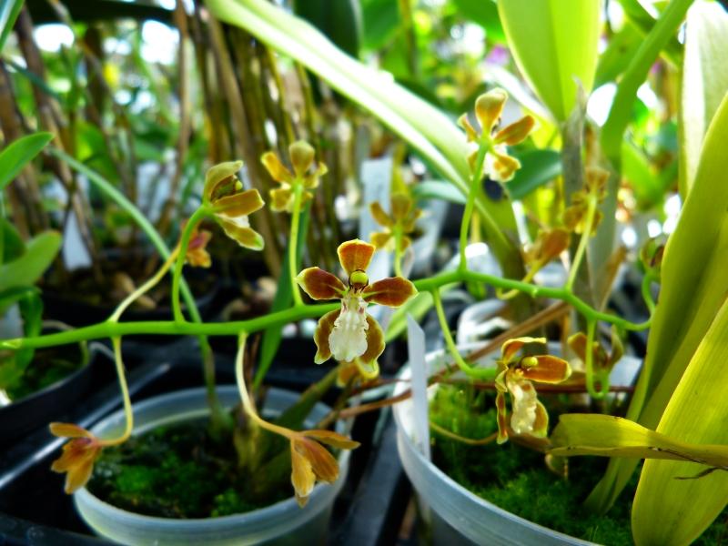 Ich war in Schwabach bei MSB Orchideen 037jwsi6