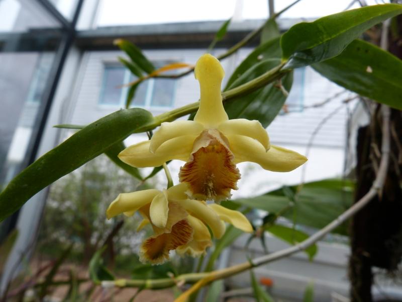 Besuch bei MSB Orchideen in Schwabach 038meuf2