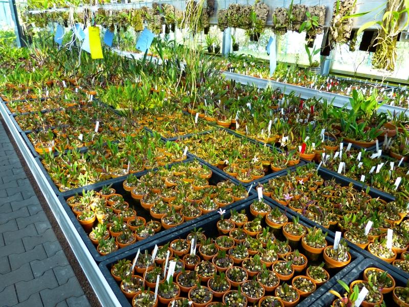 Ich war in Schwabach bei MSB Orchideen 0390zsqa