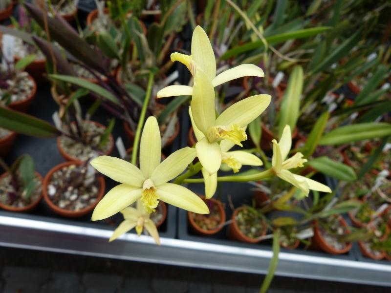 Besuch bei MSB Orchideen in Schwabach 039kyuz7