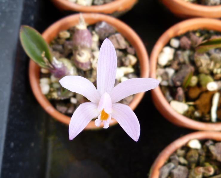 Ich war in Schwabach bei MSB Orchideen 040hxs9d