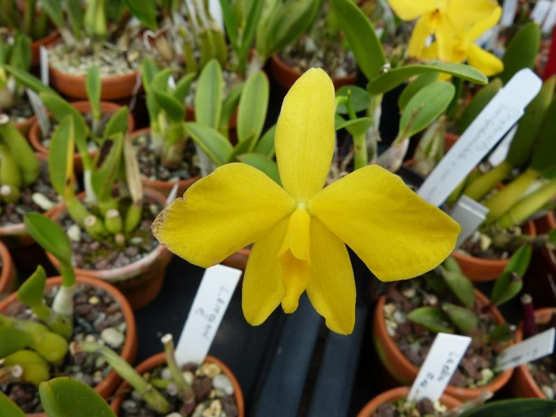 Besuch bei MSB Orchideen in Schwabach 040odu35